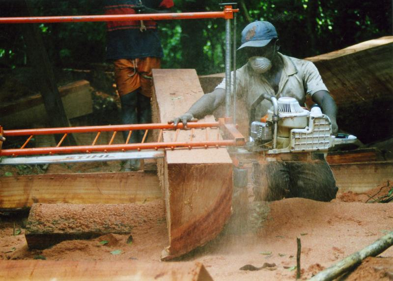 Legal Logging in Cameroon