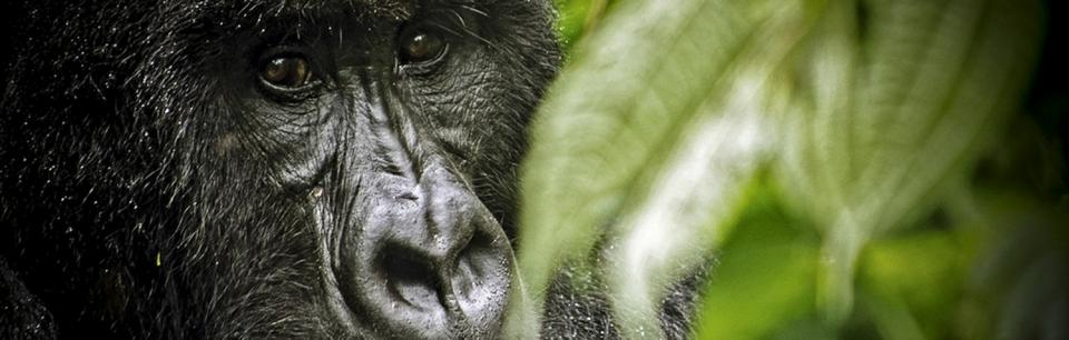 Virunga: Preserving Africa's national parks through people-centred development