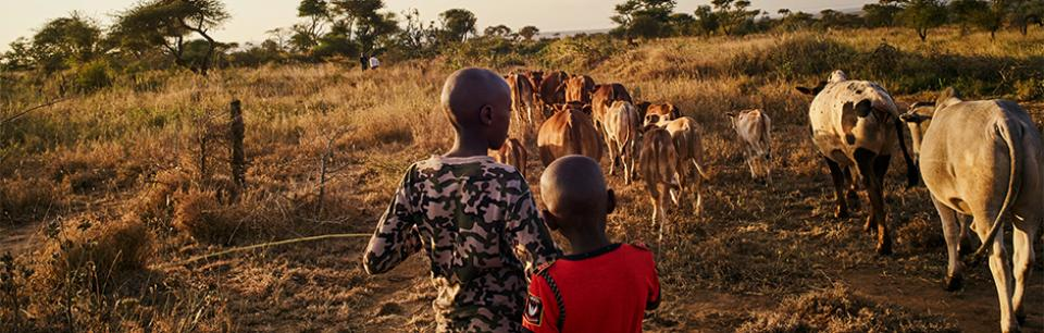 kenya children herd