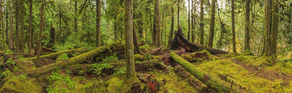 Sustainable Forest Management Topic Image
