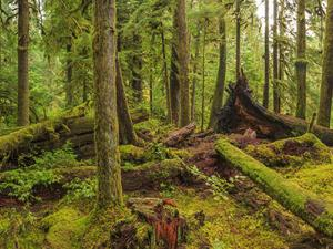 Sustainable Forest Management Thumbnail Image