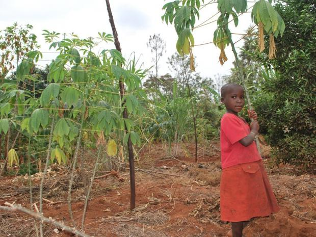 A young girl posing in field with mixed farming - cassava, banana and oranges (photo by Catherine Njuguna)
