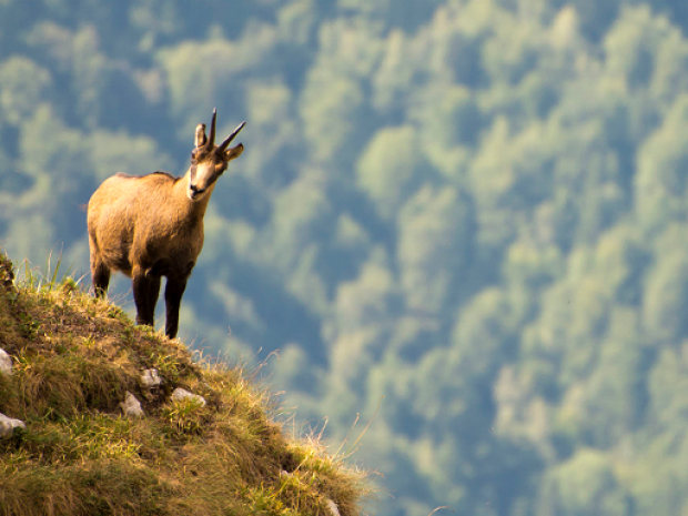 Europe\'s old-growth forests need young ideas | capacity4dev.eu