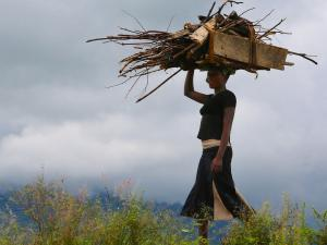Women collecting wood Uganda