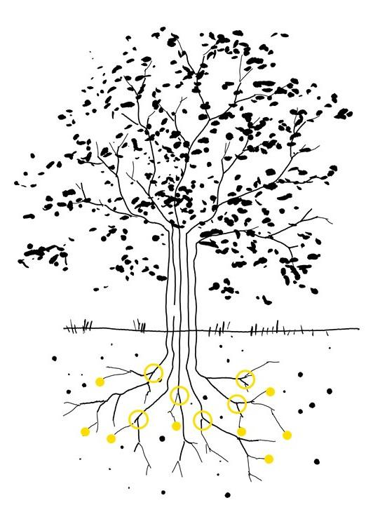 A sketch of a tree. The roots are visible, and the soil is fertile.