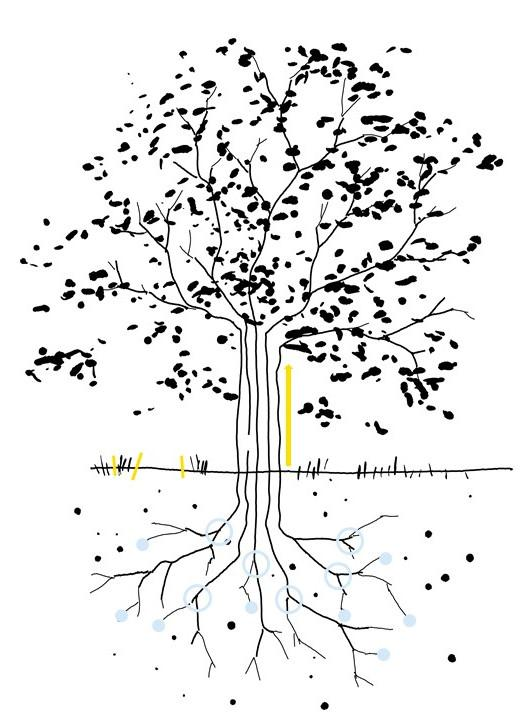 The same sketch of a tree, the trunk represents the five pilots