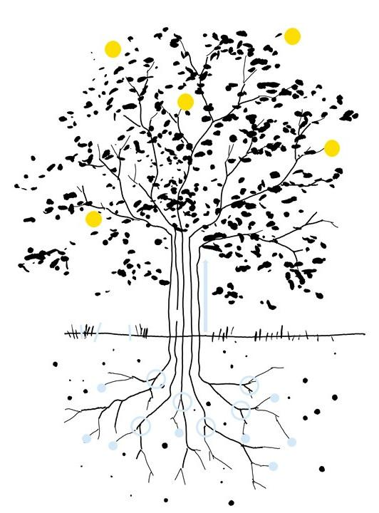 The same sketch of a tree, the fruits are highlighted