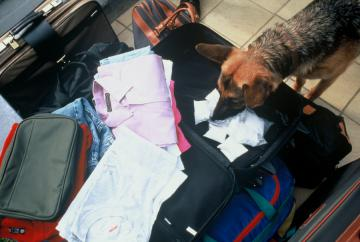 A dog searching for drugs in luggages © EU