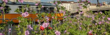 Urban view with wild weeds in the forefront © EU