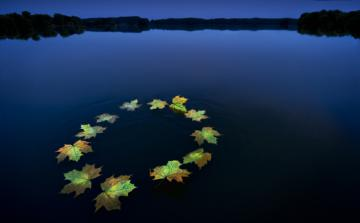 Leaves forming the European emblem on water © EU