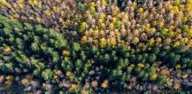 Forest from above © EU