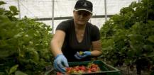 More rights and better working conditions for non-EU seasonal workers