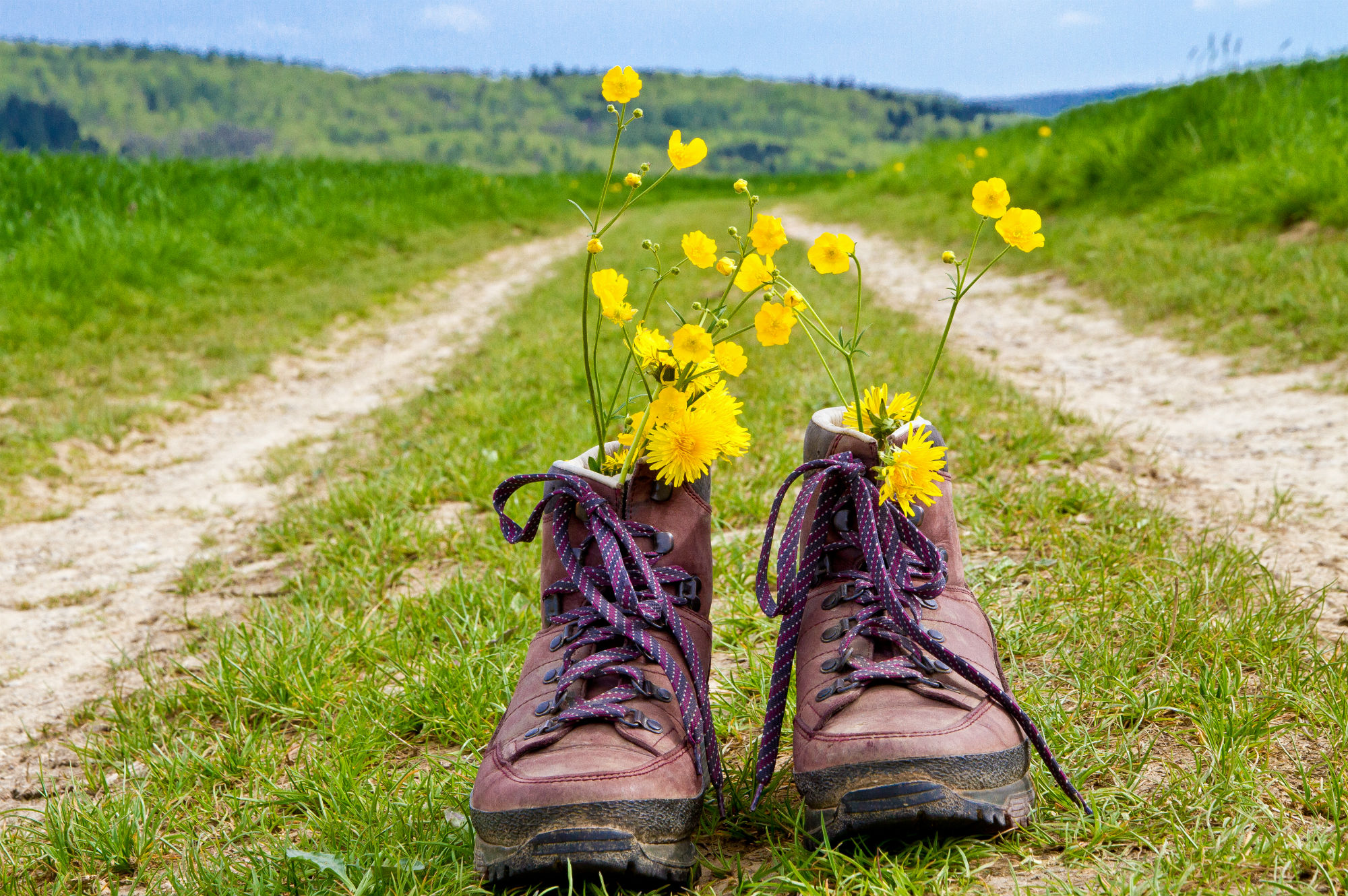 Pair of old walking shoes with field flowers inside on a road